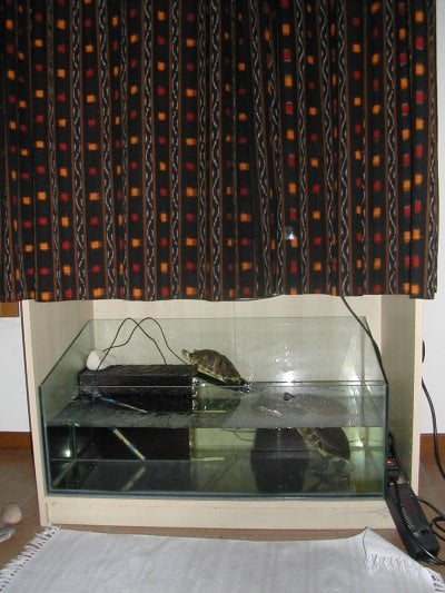turtle home - curtains closed