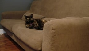 jealous cat 1