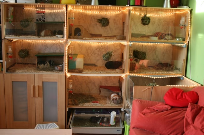 Welcome To The Guinea Pig Palace Ikea Hackers