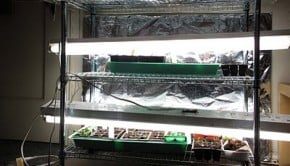Plant+setup+open-772280