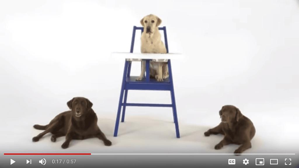 hundstol doggy high chair