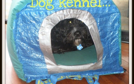 kennel+tutorial-781673