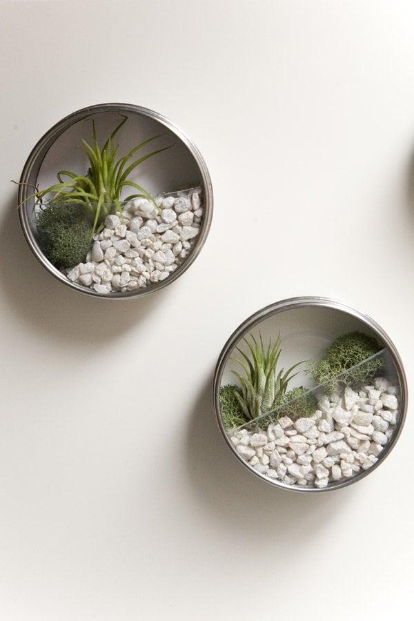 wall terrarium DIY