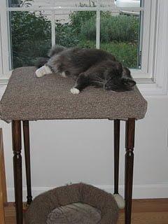 Cat+Sleeping-788481