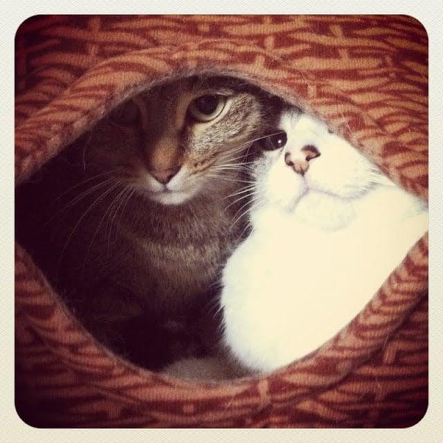 Gosig Cat Nest Ikea Hackers