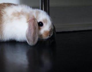 eames the bunny