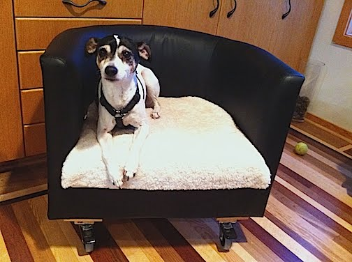 Ikea Rolling Dog Bed V2 Ikea Hackers