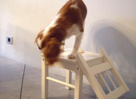 Dog Chair Ikea Hackers Ikea Hackers