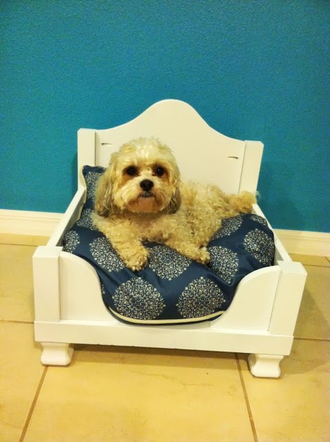 Dog Hack Side Table Converted Bed IKEA Hackers