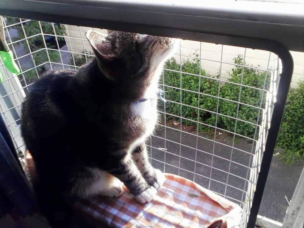 cat window seat screen
