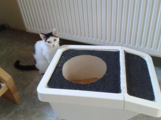 Top entrance litter box