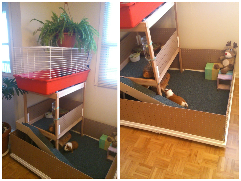 My Guinea Pigguiez House