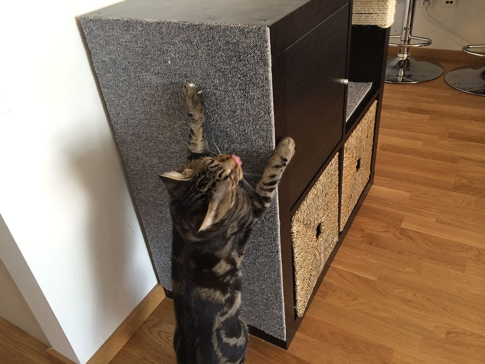 Cat Scratching Pole And Bed
