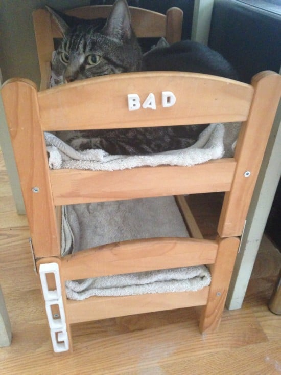 Can A Dog And A Cat Be Bunk Bed Mates Seems So Ikea