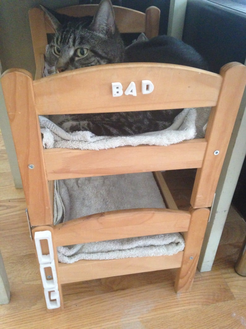 Can a dog and a cat be bunk bed mates? Seems so! - IKEA ...