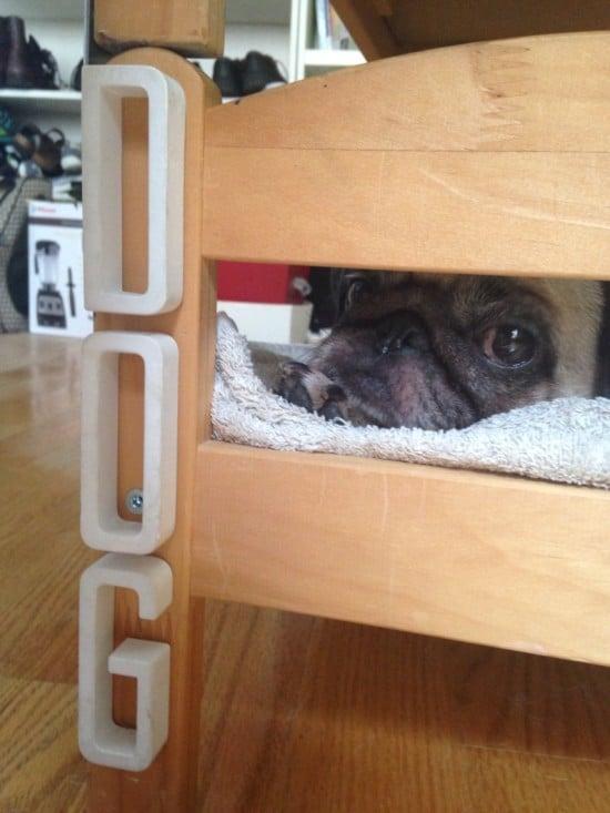 duktig pet bunk bed