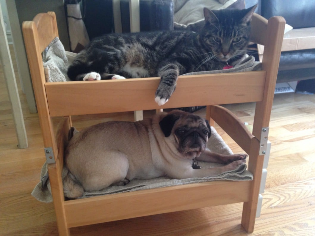 Can a dog and a cat be bunk bed mates? Seems so! - IKEA Hackers - IKEA ...