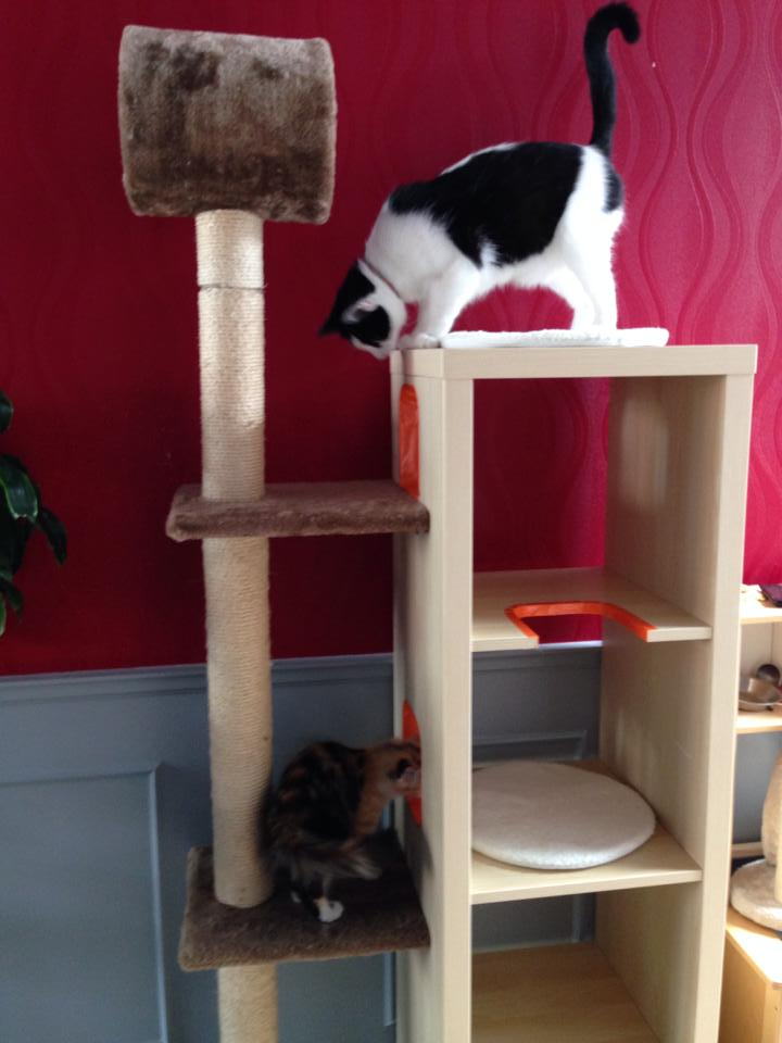 Cat Playground And Scratch Post Ikea Hackers Ikea Hackers