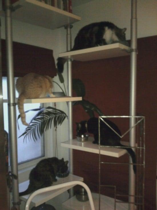 The Crew on their IKEA Feeding Station