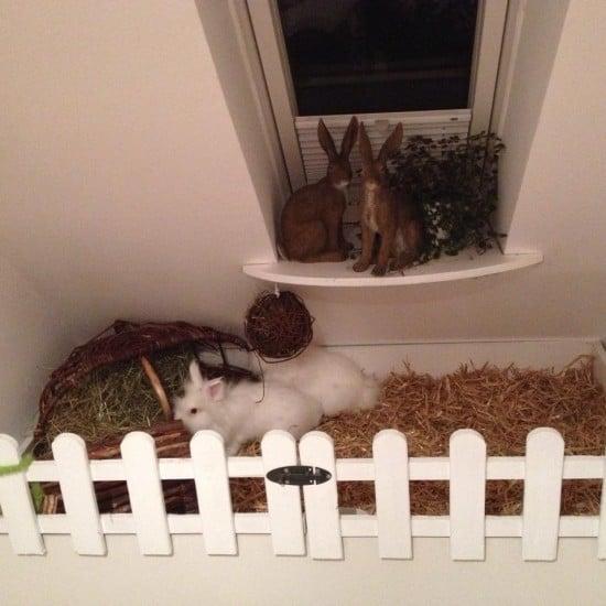 rabbit hutch5