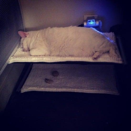 Cat Bunk Hammock