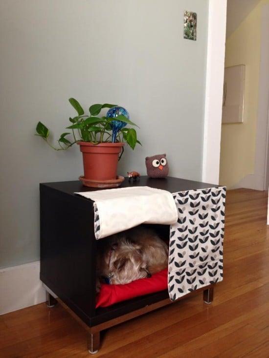 BESTA Dog Sanctuary