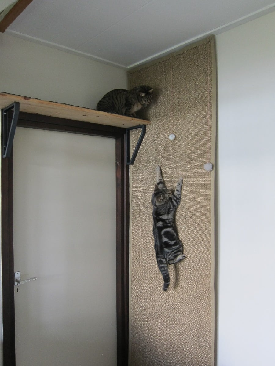 Climbing Wall For Cats Ikea Hackers