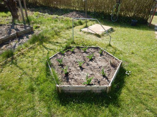 honeycomb raised vegetable garden bed_2