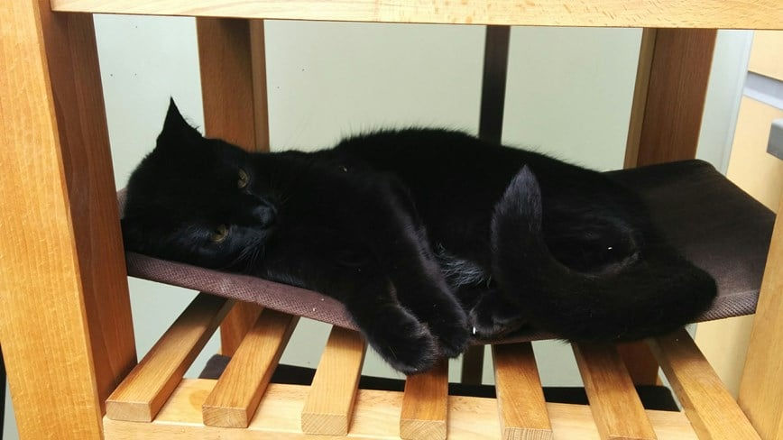 Medium image of bekv  m cat hammock
