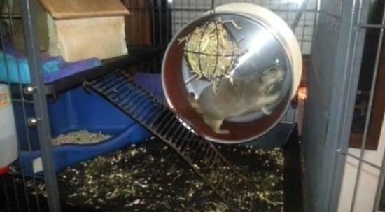 prairie dog wheel