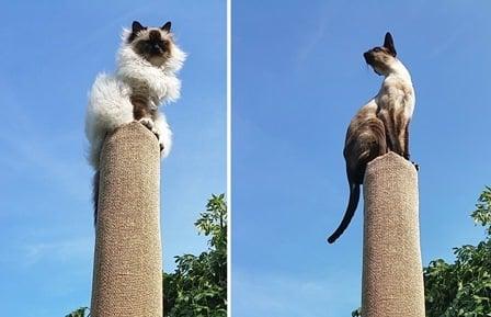 ostedcat