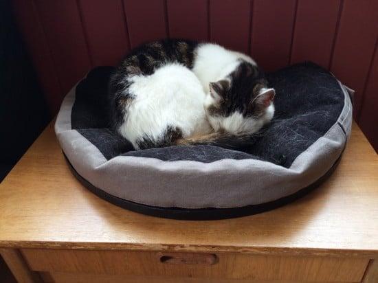 Kittycat beanbag chair