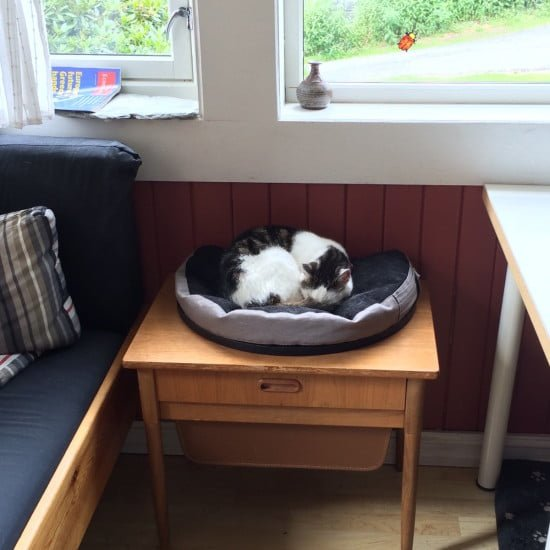 beanbag chair for cat