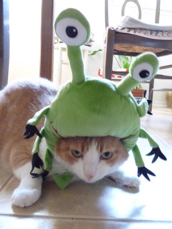 IKEA Hack Cat Halloween Costume