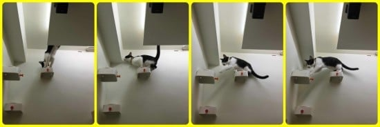 ENUDDEN cat steps on wall
