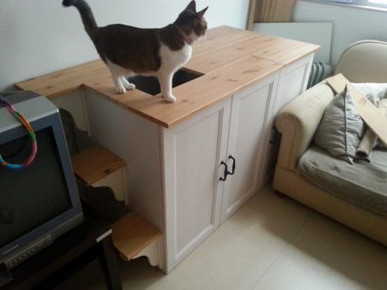 top entry cat litter