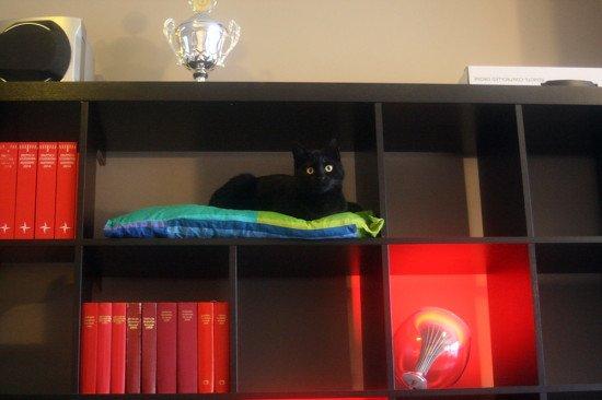Hidden cat tree in an IKEA Expedit/Kallax