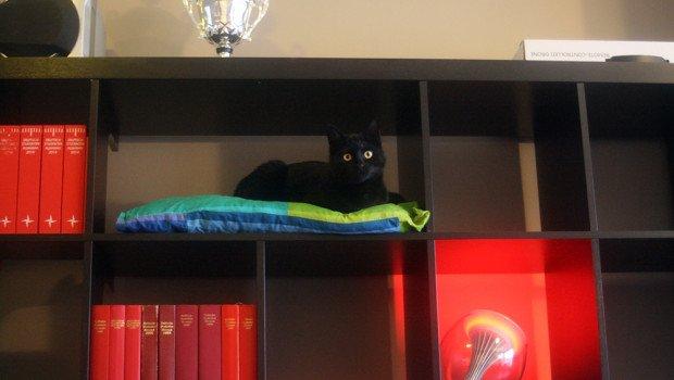 A Cat Tree Hidden In An Expedit Kallax Ikea Hackers