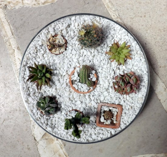 Mini cactus garden in an IKEA BLOMSTER bowl