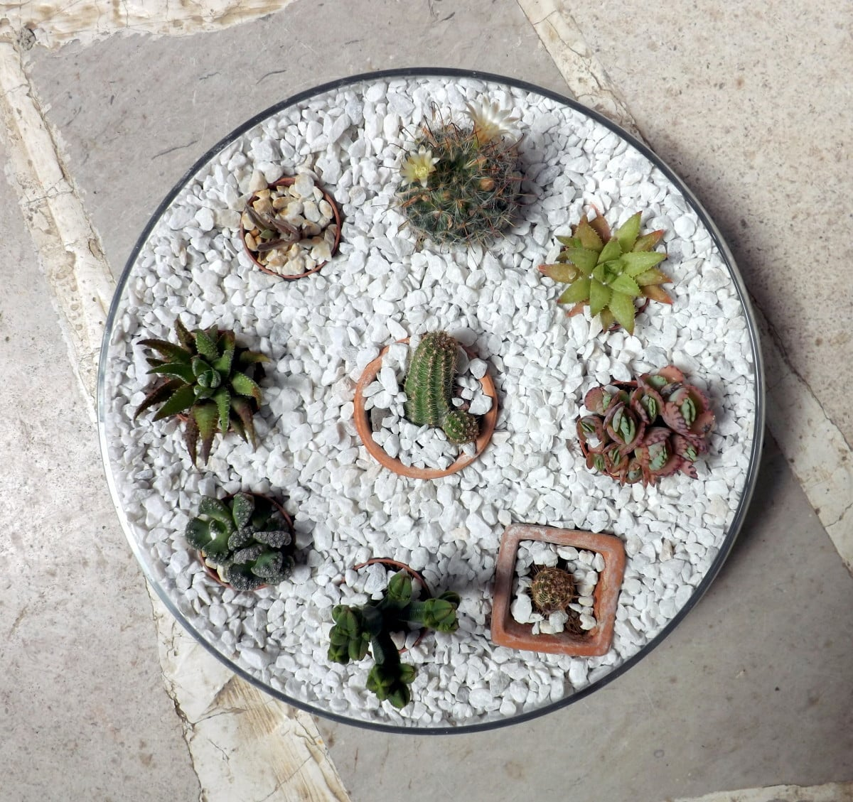 mini cactus garden in an ikea blomster bowl ikea hackers ikea hackers. Black Bedroom Furniture Sets. Home Design Ideas