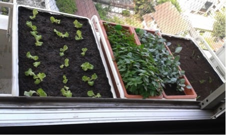 ALGOT window herb garden in use