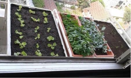 ALGOT window herb garden in use