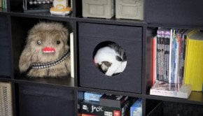 expedit_cat_box