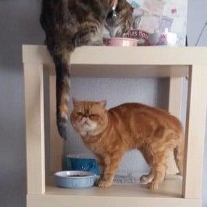 LACK cat storage tn