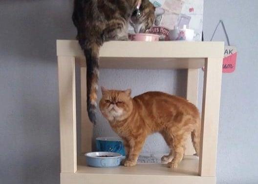 Crazy Cat Lady Storage Unit Ikea Hackers