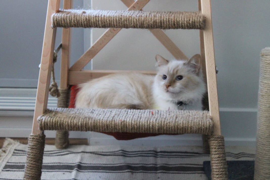 Diy Cat Tree With Hammock Ikea Hackers