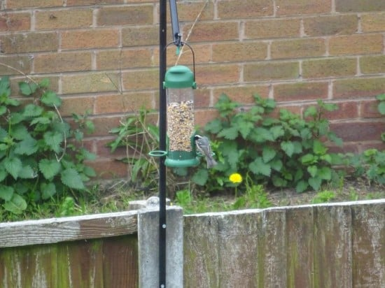 Bodo bird feeder