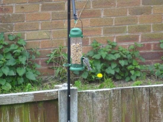 Bodo bird feeder