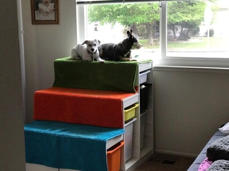 DIY dog window perch with steps