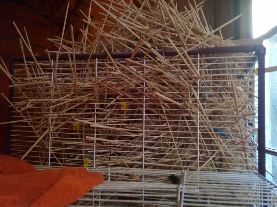 New house for my parrots - IKEA bird cage hack